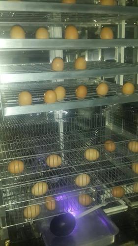 venta de incubadora para aves 500 huevos de gallina automati