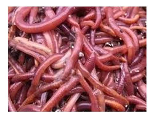 venta de lombriz roja californiana en tláhuac y coyoacán