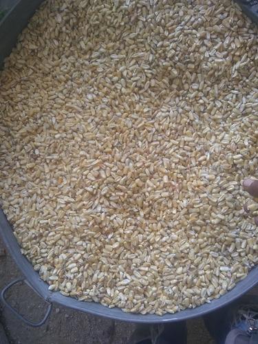 venta de maíz