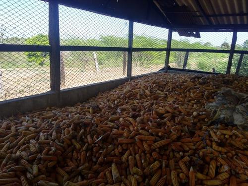 venta de maíz rojo al mejor precio