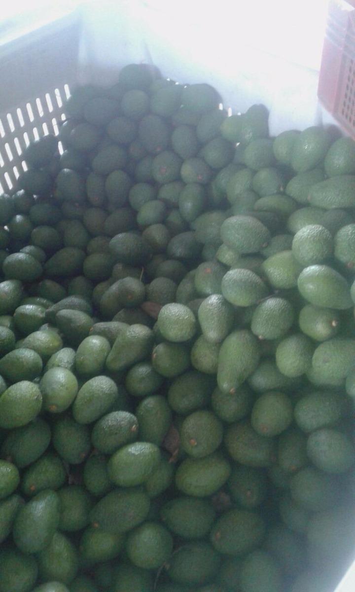 e276e9481c64 Venta De Palta Hass Exportacion -   10 en Mercado Libre