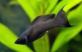 venta de peces agua dulce, diseño de acuarios