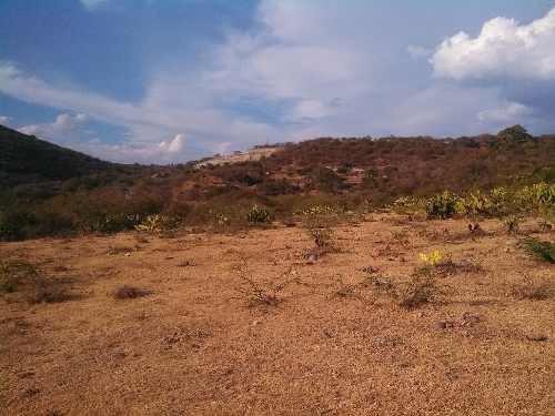 venta de rancho en amacuazac morelos, ajonjolines
