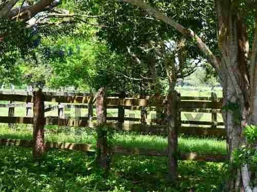 venta de rancho ganadero en tuxpan veracruz 1229 hectáreas, colinda con mas de 3 km aproximadamente al estero del tecocoy, y con el canal de mojarras, tiene pasto, tanques elevados, bebederos, pozo,