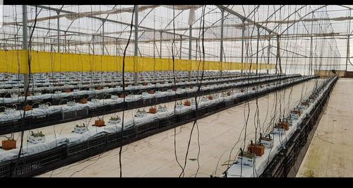 venta de rollos trampa para cultivos