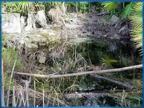 venta de terreno con cenote en tulum quintana roo