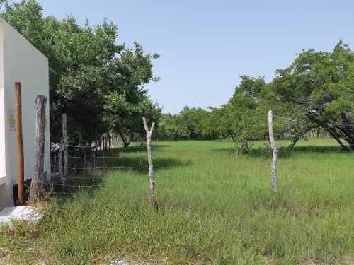 venta de terreno en holbox 2000 m2 quintana roo