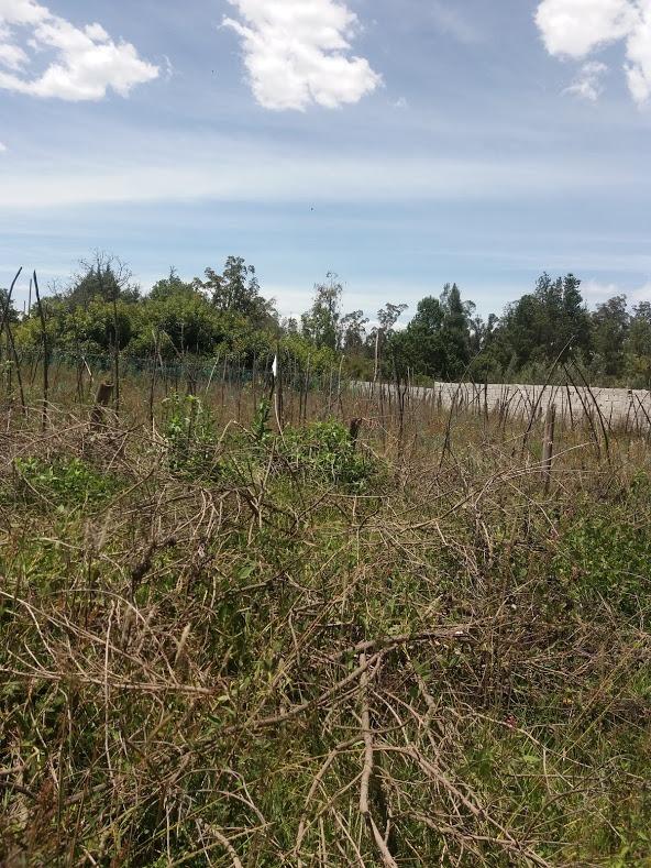 venta de terreno en tababela ( terrenos dac )