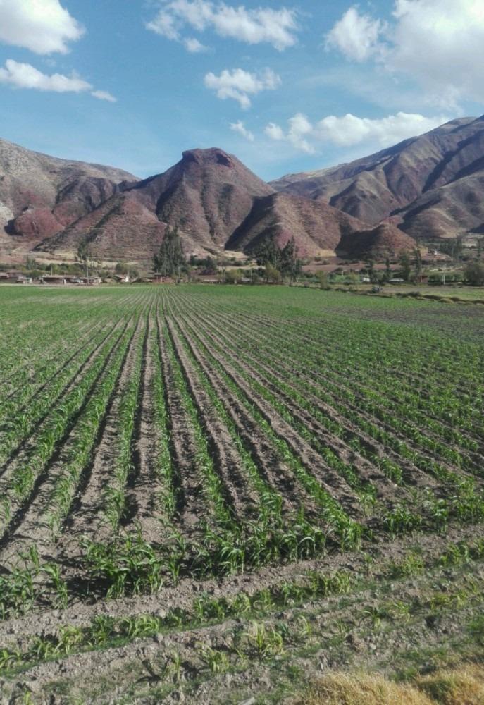 venta de terreno provincia urubamba - cusco