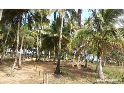 venta de terreno ubicado en la playa de tuxpan veracruz. ubicado en la congregación de san antonio antes de la termoeléctrica en el municipio de tuxpan. cuenta con 44.85 metros de frente por 115.65 m