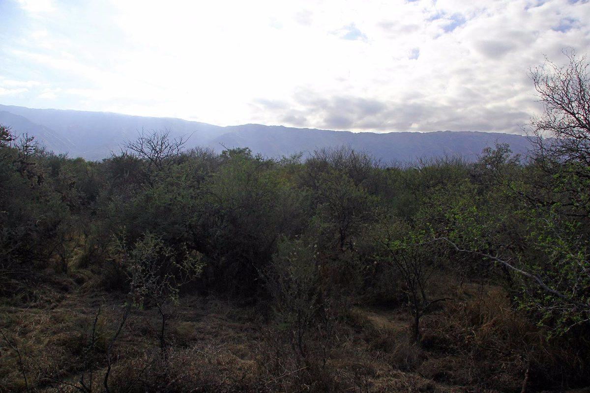 venta de terrenos en cerro de oro despertar del valle merlo
