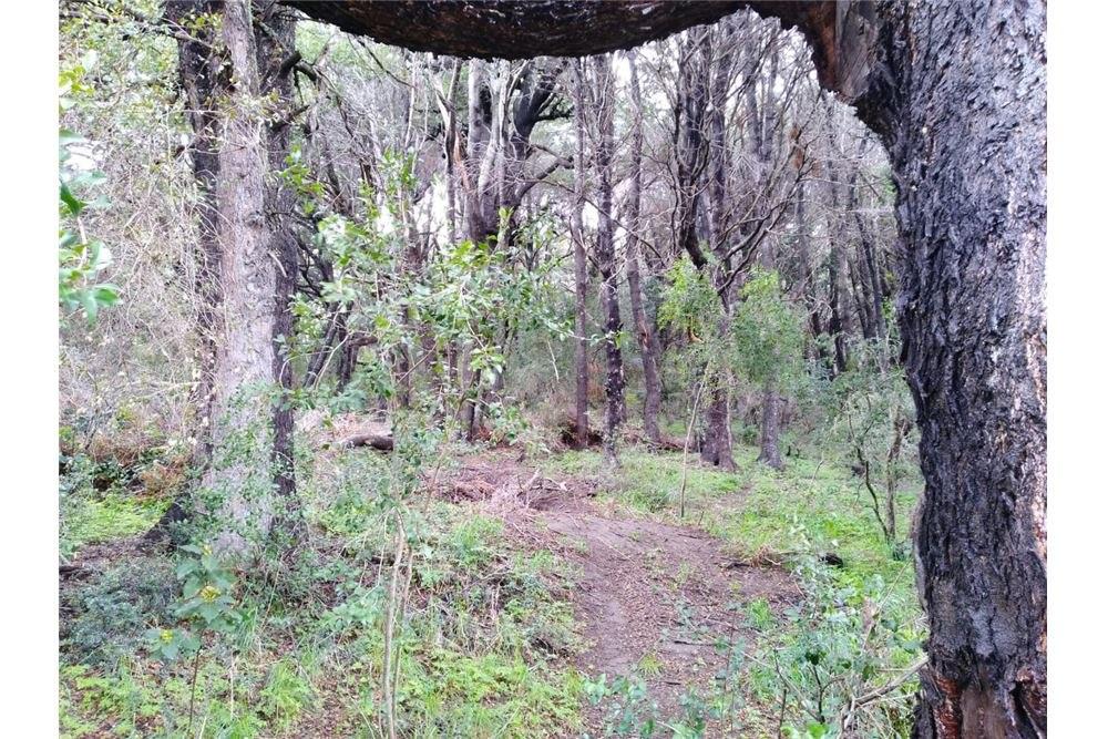 venta lote bosque bariloche península san pedro