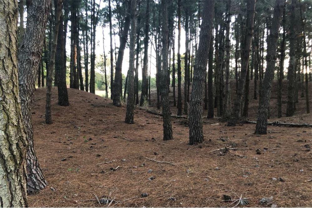 venta lote costa esmeralda - barrio bosque