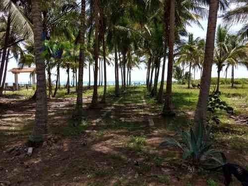 venta rancho 100 hectáreas con casa en la playa tamiahua veracruz. en la orilla del mar del golfo de méxico, con frente de playa 800 metros, y hacia el rió, cuenta con 800 de frente al rió, 100 hectá