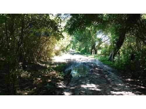 venta rancho 160 hectáreas con estero tamiahua veracruz, se encuentra ubicado junto al estero de milpas, por un camino vecinal de terraceria a unos metros de la carretera tuxpan tamiahua y tambien a