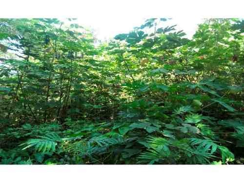 venta terreno colonia las granjas de alto lucero tuxpan veracruz 239.60 m², son 15.63 m. de frente a la calle por 15 m. de fondo, ubicado en calle sin nombre a unos metros del campo de fútbol, la zon