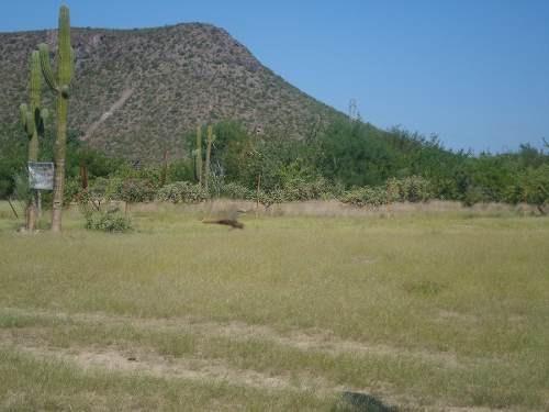 venta terreno en ampliación   mezquitito