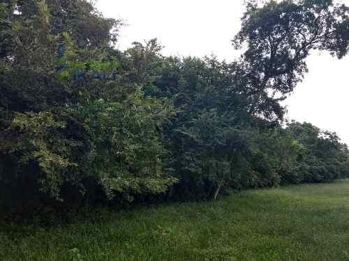 venta terreno rancho 11 hectáreas tamiahua veracruz. ubicado en carretera tuxpan- tamiahua en la localidad paso de san lorenzo s/n, con una superficie plana de 110,000 m², ideal para ganadería, agric