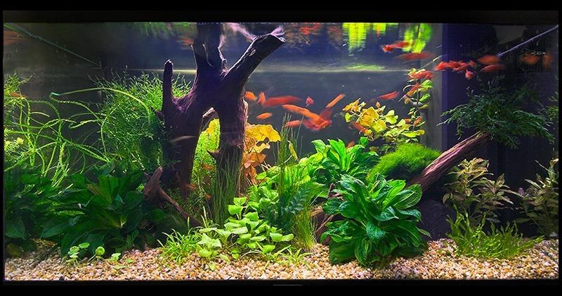 Venta y montura de acuarios para tiendas en for Acuariofilia peces ornamentales