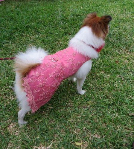 vestido para mascota - color coral