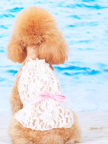 vestido perra chica pequena cachorrit encaje blanco xs stock
