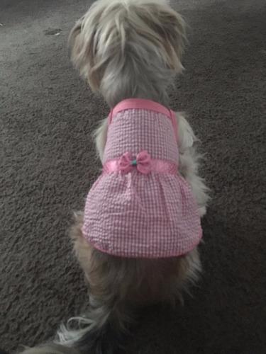 vestido ropa para perros