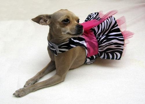 vestidos animal prin zebra talla chihuahua