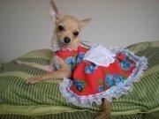 vestidos para mascota