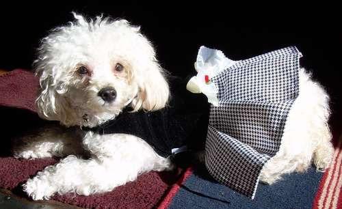 vestuarios de invierno  para tu mascota
