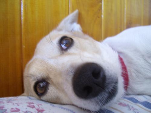 veterinaria a domicilio ,con experiencia(gba sur ycaba.)