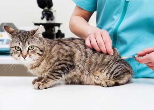veterinaria a domicilio zona norte gba