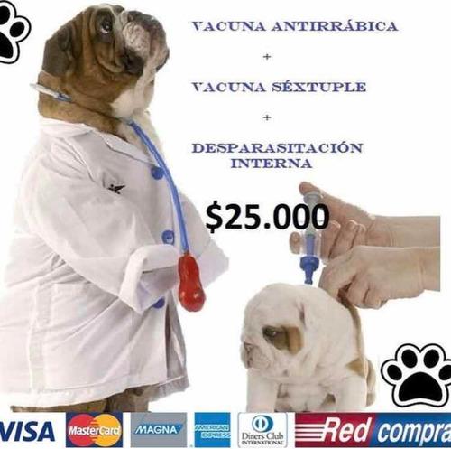 veterinario a domicilio