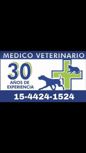 veterinario a domicilio, urgencias, cirugía