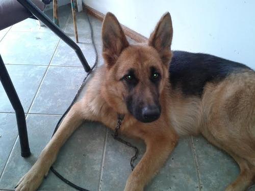veterinario a domicilio y tambien telemedicina 094104176