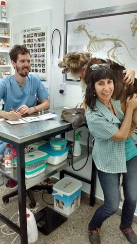 veterinario a domicilio zona sur (bsas)