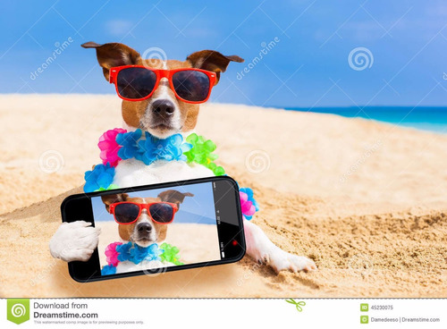 viaje a la costa en combi con su mascota/puerta a puerta