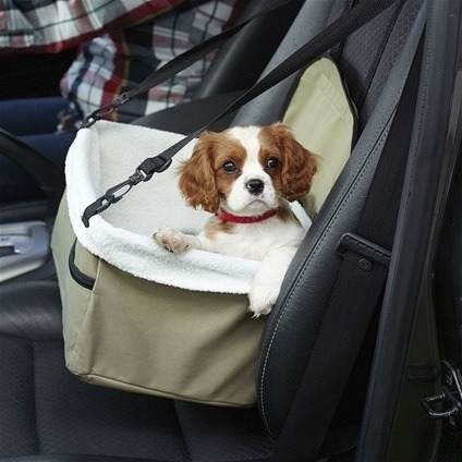 viaje perro mascota