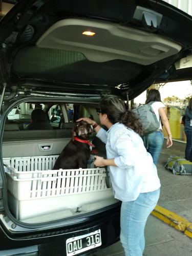 viajes ezeiza, aeroparque, la plata , mascotas, turismo