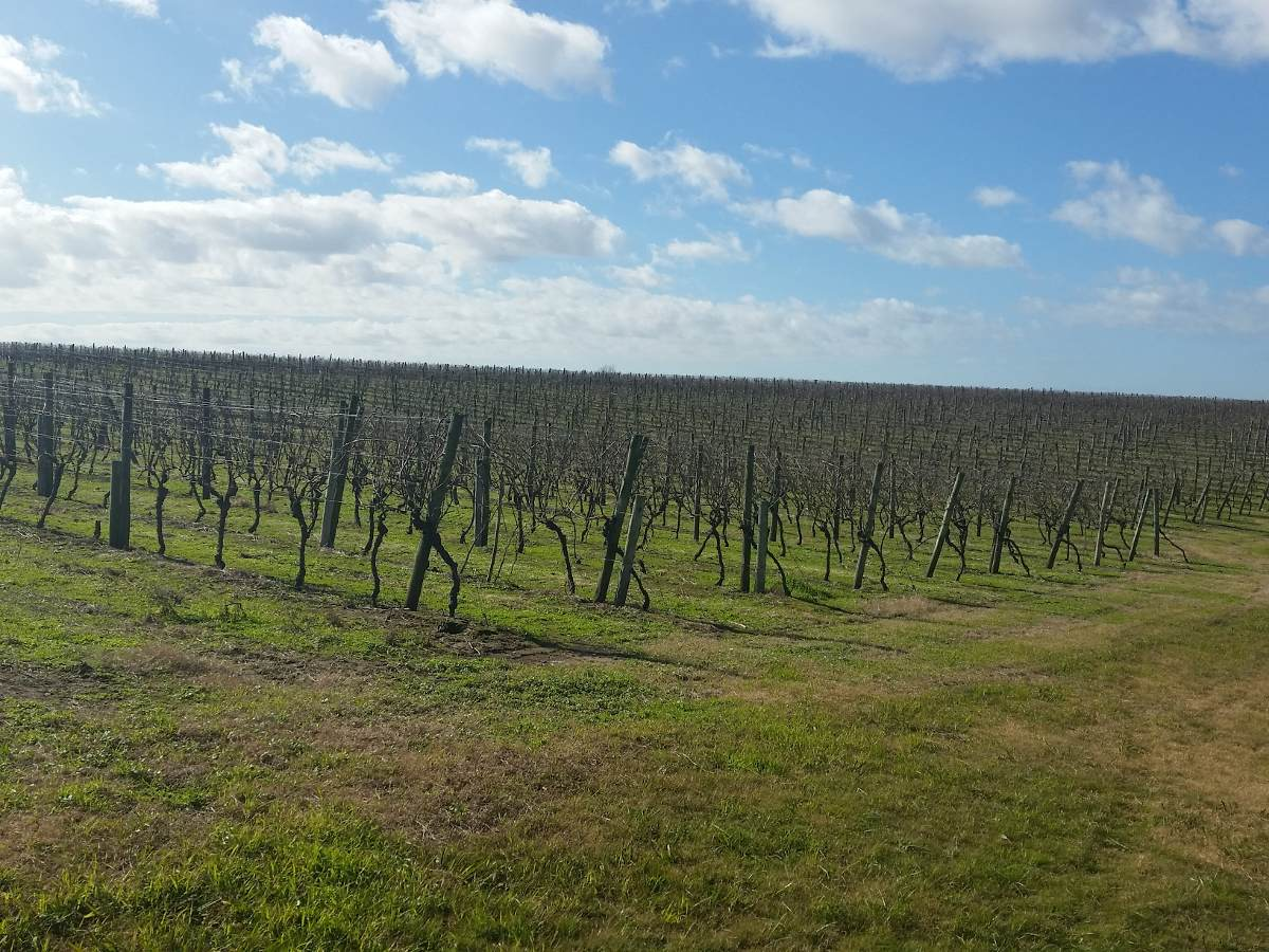viñedos en cno de los granjeros (casi av. mendoza) v168