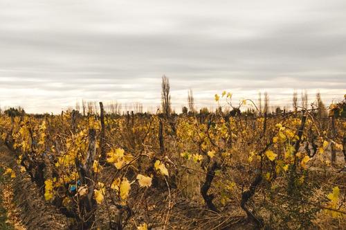 vino cabernet sauvignon reserva umbro x 6 botellas de 750 ml