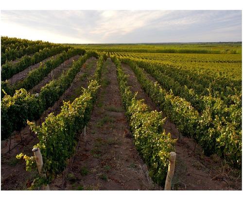 vinos reserva del fin del mundo malbec chardonnay combo x12