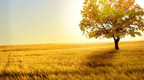 viva bem viva em contato com a natureza  04
