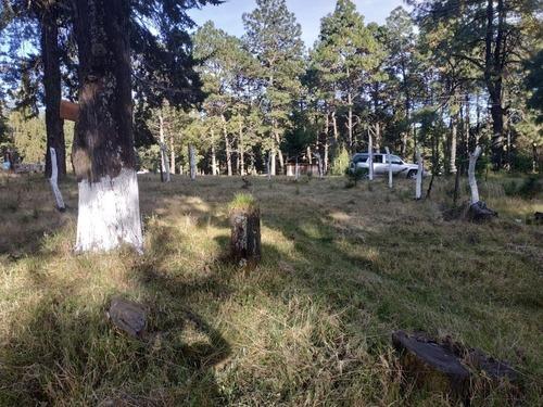 viva rodeado de la naturaleza cabañas y terrenos