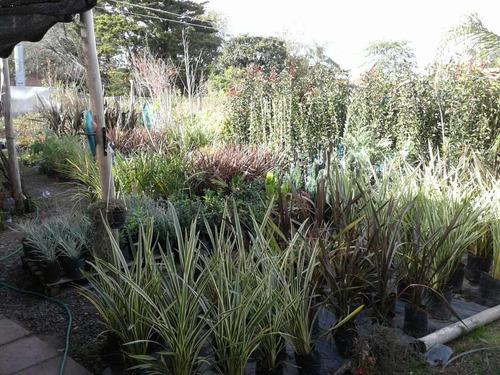 vivero diseño paisajista plantas