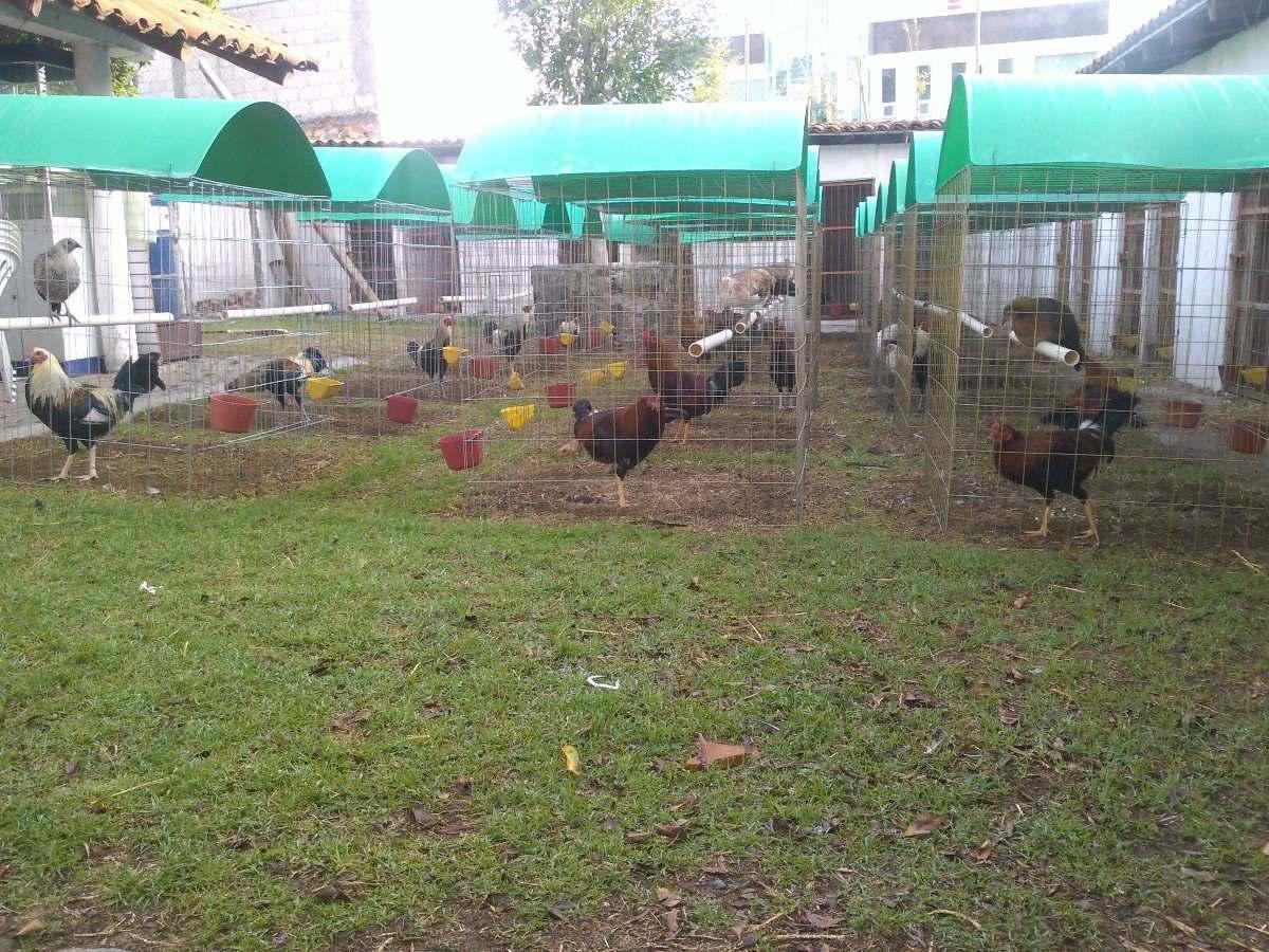 Voladeros para gallos en mercado libre - Voladeros de jardin baratos ...
