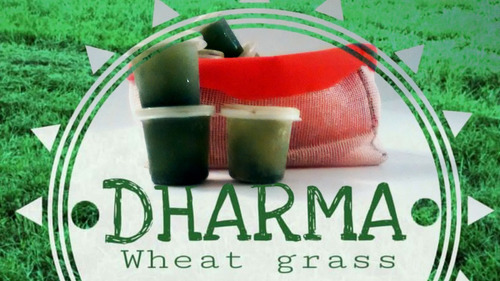 wheatgrass frozen shots