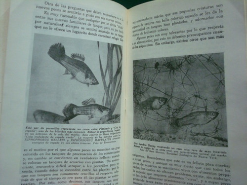 william vorderwinkler, peces de gestación interna.