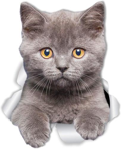 winston  bear british shorthair cat wall decals   pack ...