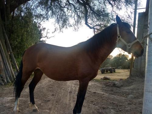 yegua colorada