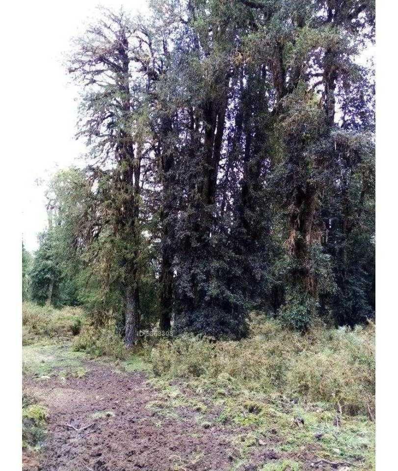 z o n a s u r . c l propiedades vende terreno región de aysén 87,5 hectáreas